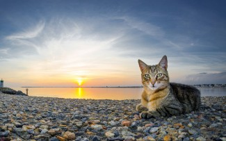 460192 cats cat on the beach
